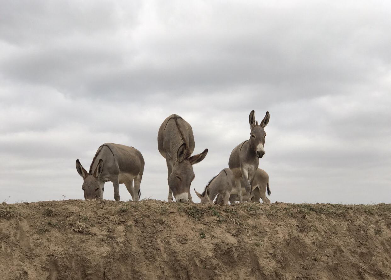 Hübsche Esel auf dem Weg in die Masai Mara